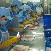 Development of professional fresh fish chain