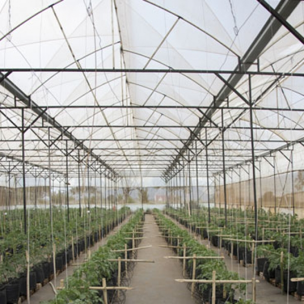 Accelerating a modern greenhouse vegetable production sector