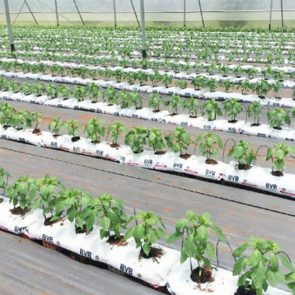 First milestones achieved for the development of a modern greenhouse sector