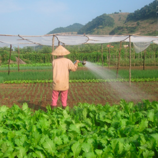 Moc Chau safe vegetables for the common interest of farmers, suppliers, retailers and consumers